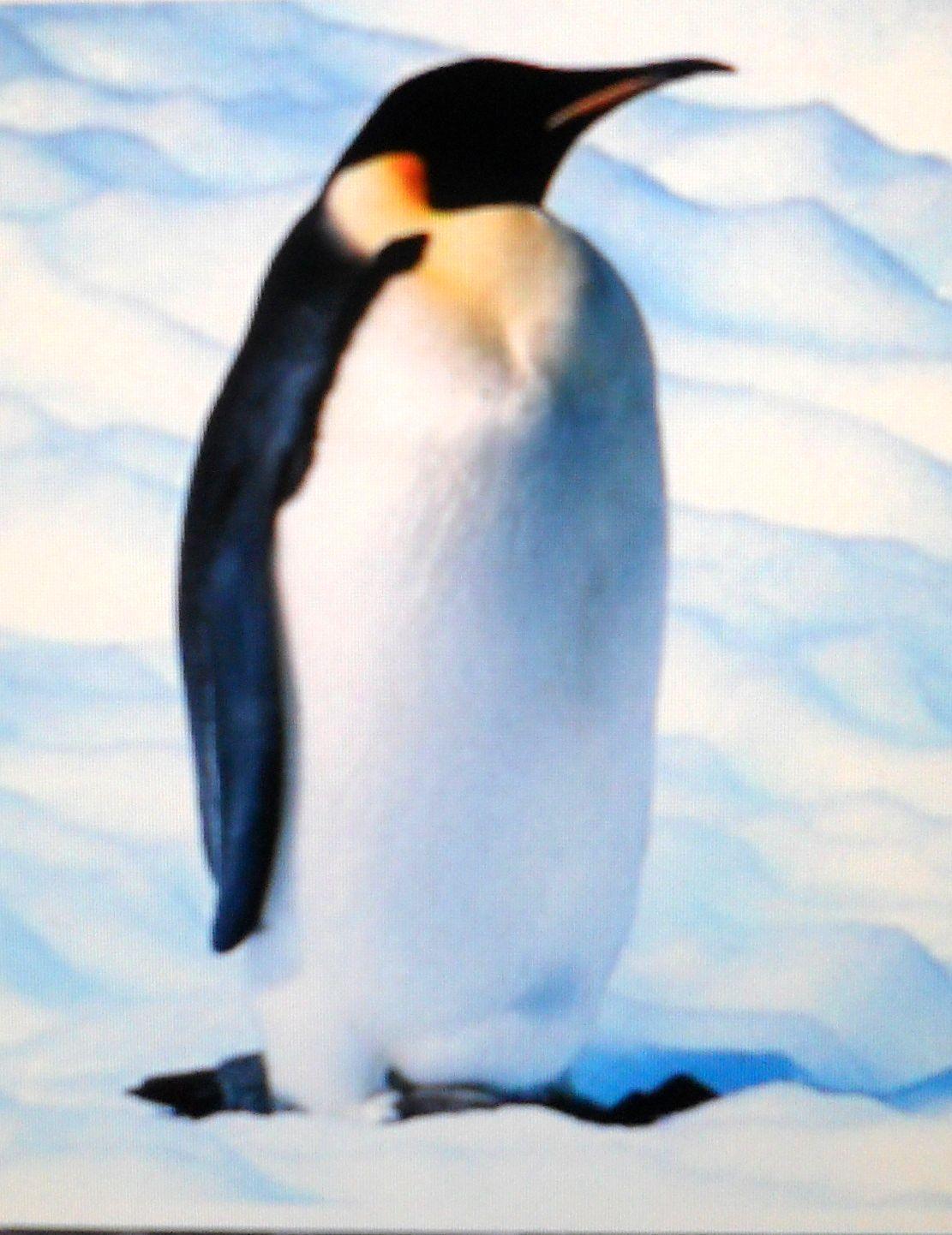 pinguino dating siti di incontri completamente gratuiti in Asia