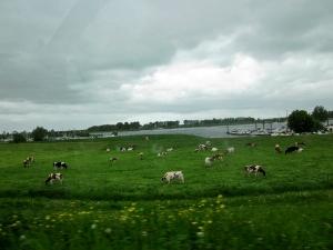 Imagen de Holanda- rural- desde el coche