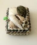 Colección particular Caja de conchas que en la actualidad podemos encontrar en algunos mercados  de artesanía